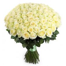 101 подмосковная белая роза