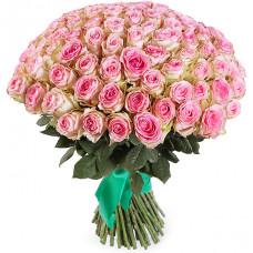 101 кремово-розовая роза (Эквадор)