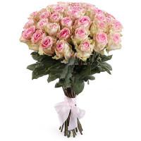 51 кремово-розовая роза (Эквадор)