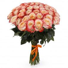 51 бело-коралловая роза (Эквадор)