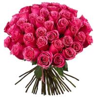 51 малиновая роза (Эквадор)